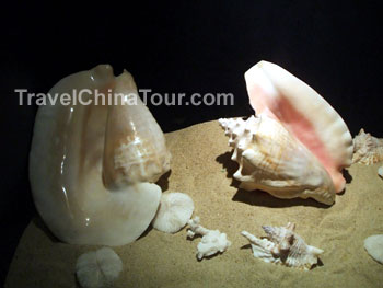 Yalong Bay Seashell Museum